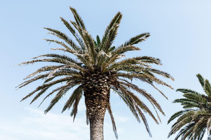 palmtree in Aveiro